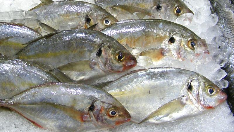 sveže ribe